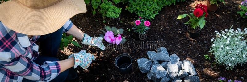 拿着开花植物的美丽的女性花匠准备好在她的庭院里被种植 概念从事园艺 万维网横幅 库存图片
