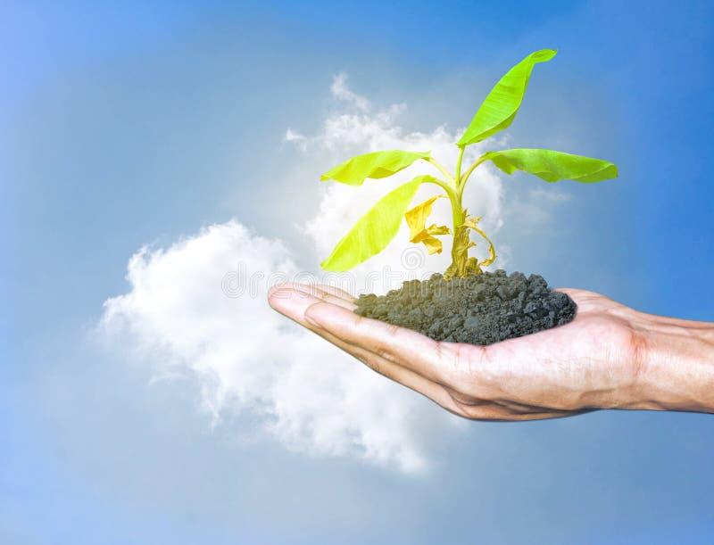 拿着成长植物的手一棵树有天空和云彩云彩心形背景 的世界地球日和狂放保存世界的保护 库存图片