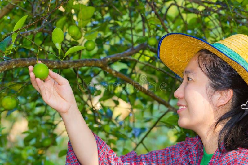 拿着新鲜的柠檬的女性农业学家手 免版税库存图片