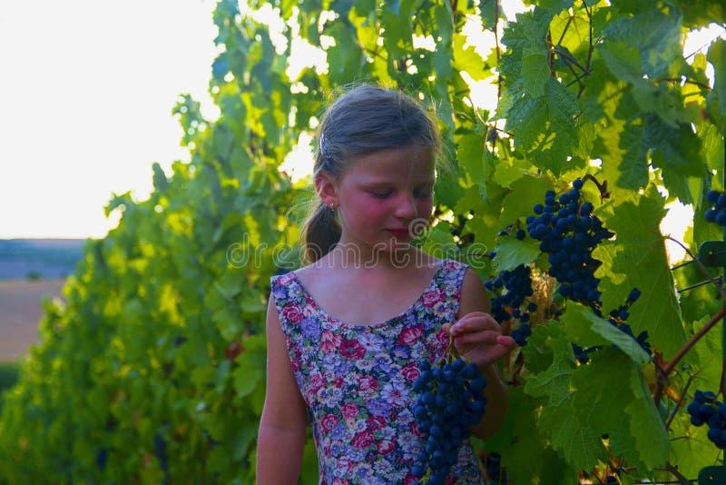 拿着新鲜的蓝色葡萄的逗人喜爱的小女孩在一个晴朗的秋天葡萄园里 穿开花的礼服的学龄前女孩 甜 库存照片