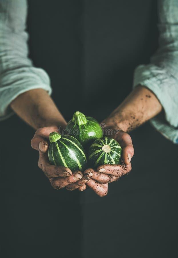 拿着新鲜的绿色夏南瓜的黑围裙的农夫 库存图片