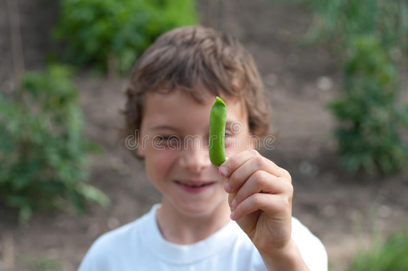 拿着新鲜的绿豆荚的一个年轻男孩 库存照片