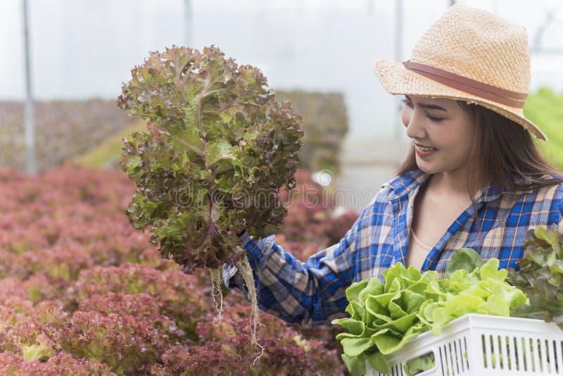 拿着新鲜蔬菜和有机蔬菜的篮子一名亚裔妇女的画象从农场 菜耕种和 免版税库存图片