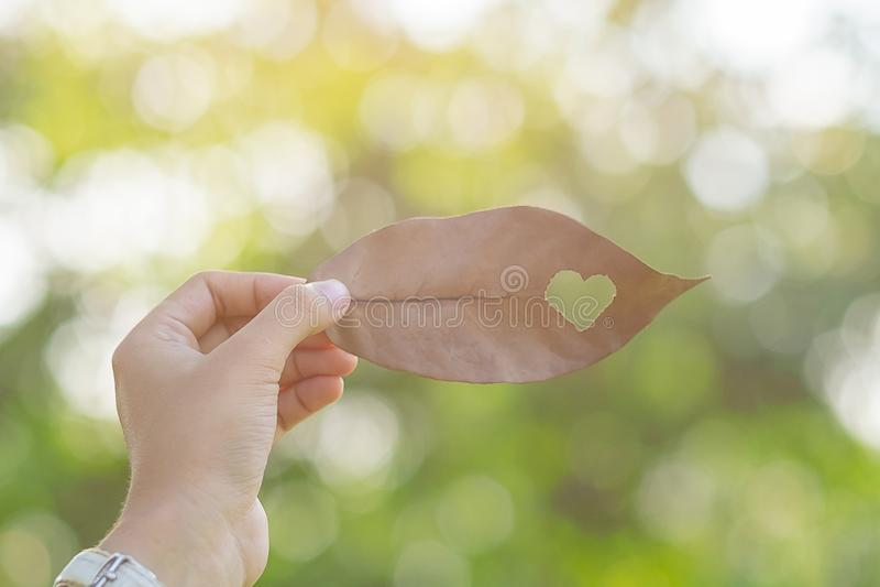 拿着有心形的妇女手干叶子在绿色自然本底在庭院里室外 社会责任感爱和 免版税库存图片