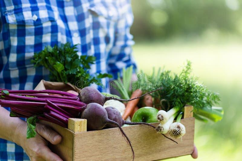 拿着有新鲜的有机菜和草本的妇女箱子 免版税图库摄影