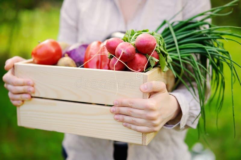 拿着有新鲜的有机菜的女性花匠木板箱从农场 免版税库存照片
