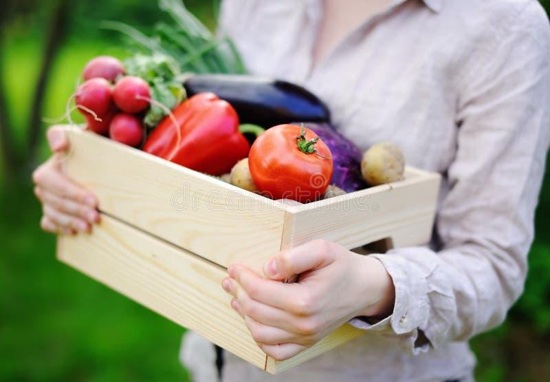 拿着有新鲜的有机菜的花匠木板箱从农场 免版税库存图片