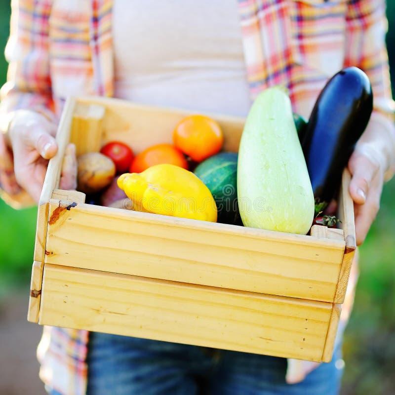 拿着有新鲜的有机菜的花匠木板箱 库存图片