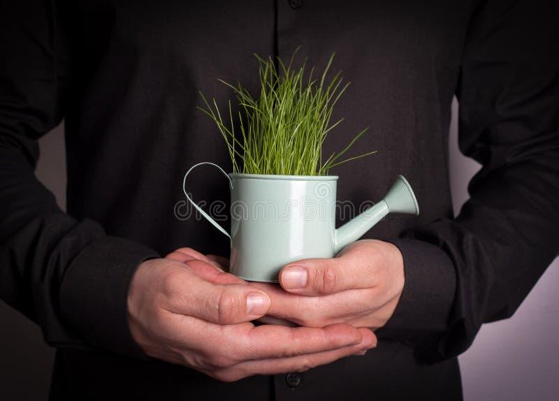 拿着有新鲜的绿色春天草的人的手微型喷壶 事务和发展的抽象背景 免版税库存图片