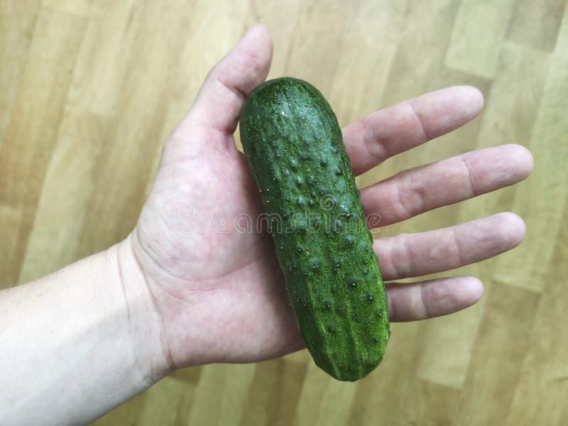 拿着有机可口黄瓜的手 E 免版税库存图片