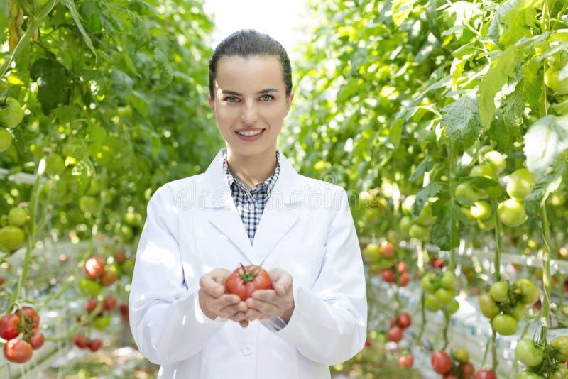 拿着有机蕃茄的微笑的科学家画象在温室 免版税库存照片