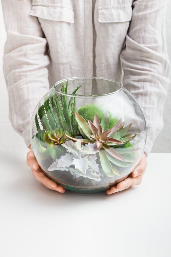 拿着有植物的妇女玻璃florarium花瓶 免版税图库摄影