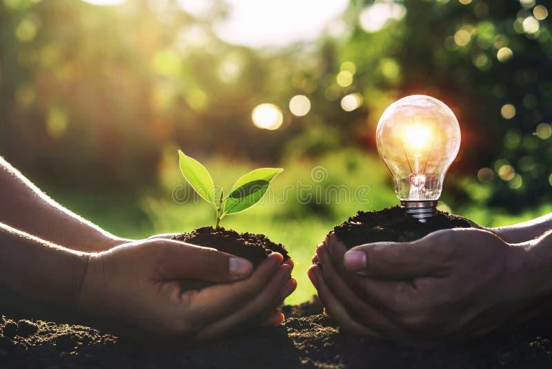 拿着有电灯泡的手年幼植物在土和日落背景 库存图片