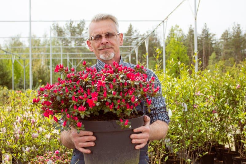 拿着有红色花的花匠一个大罐 库存照片
