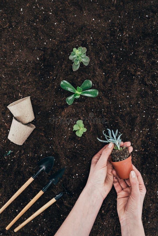 拿着有绿色植物和土壤的人罐 免版税库存照片