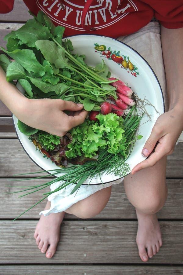 拿着有萝卜、莴苣和葱第一个收获的少女一个碗  免版税图库摄影