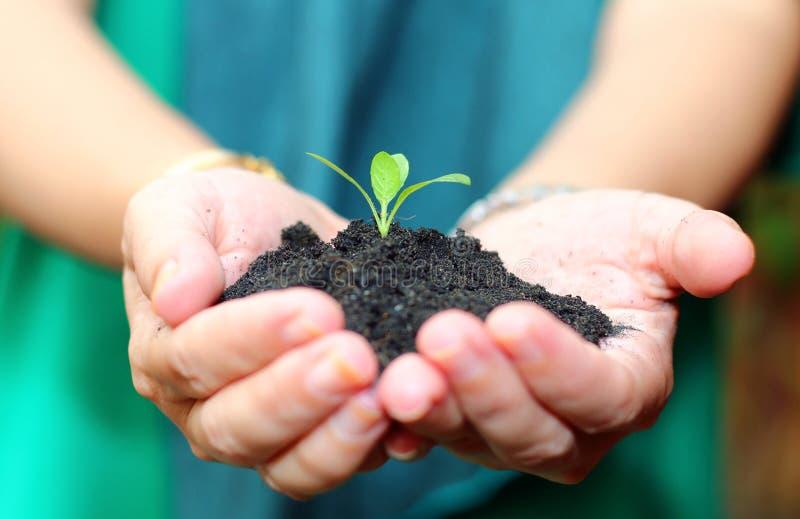 拿着有黑土壤的手绿色植物 免版税库存照片