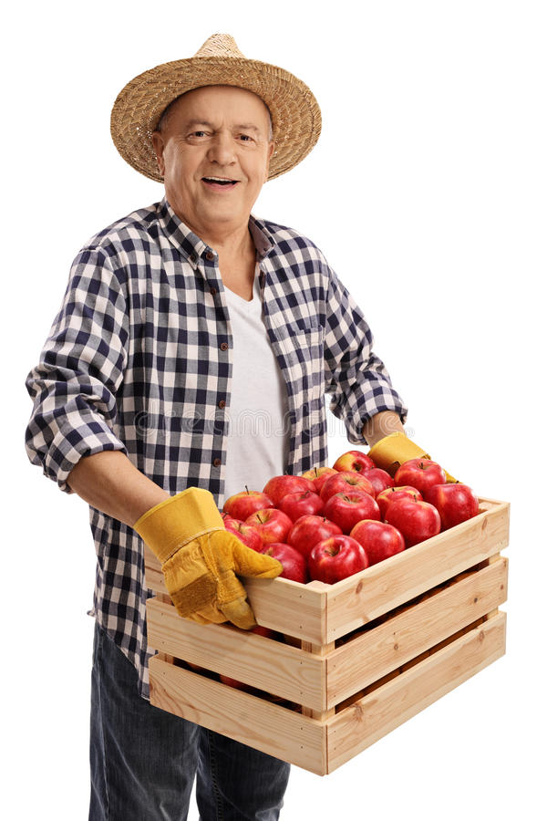 拿着条板箱的年长农夫用苹果填装了 库存图片