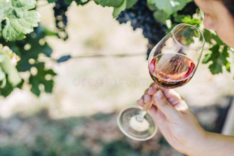 拿着杯在葡萄园领域的红酒的妇女 品酒在室外酿酒厂 免版税库存图片