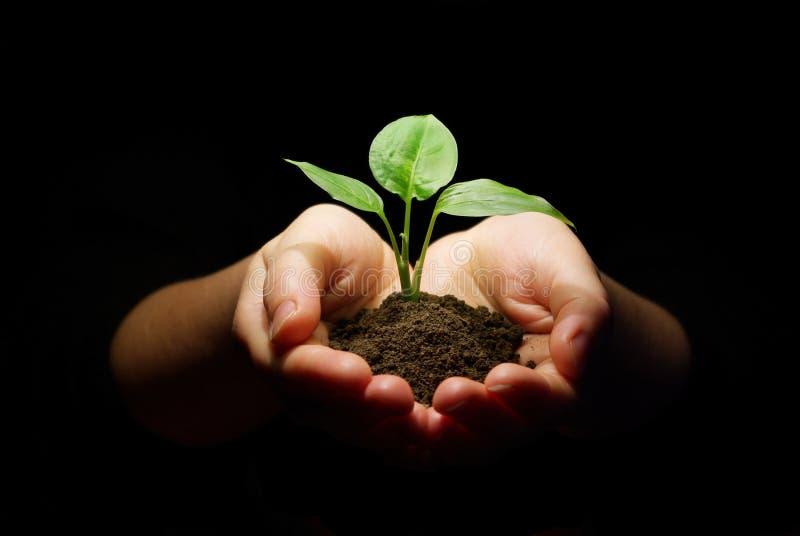 拿着树苗土壤的现有量 免版税库存照片