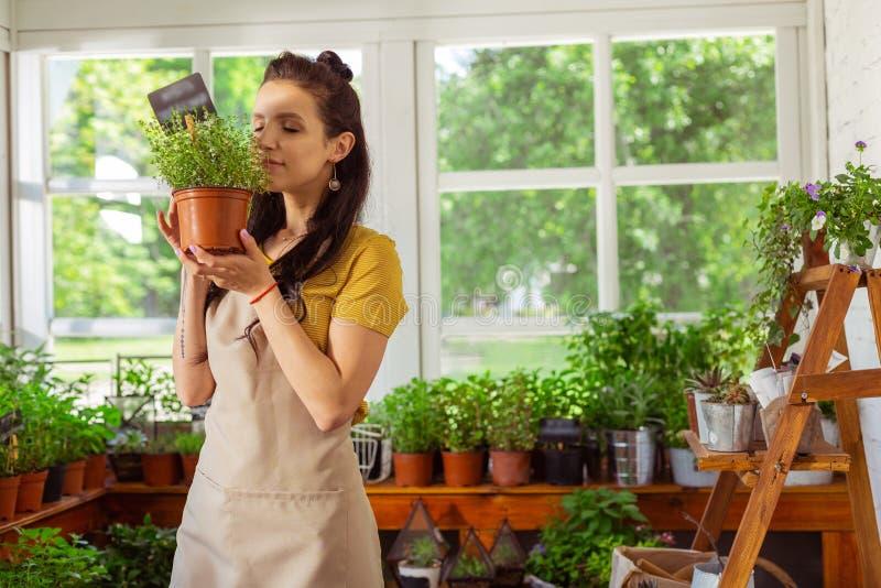拿着植物和嗅它的卖花人 库存图片