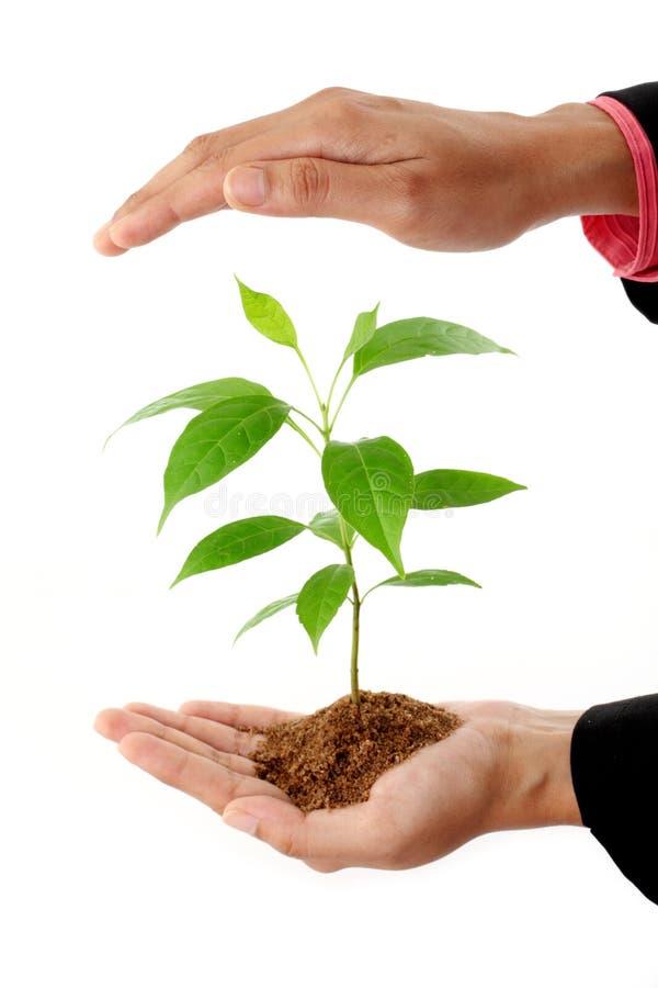 拿着植物的女商人手 免版税库存图片
