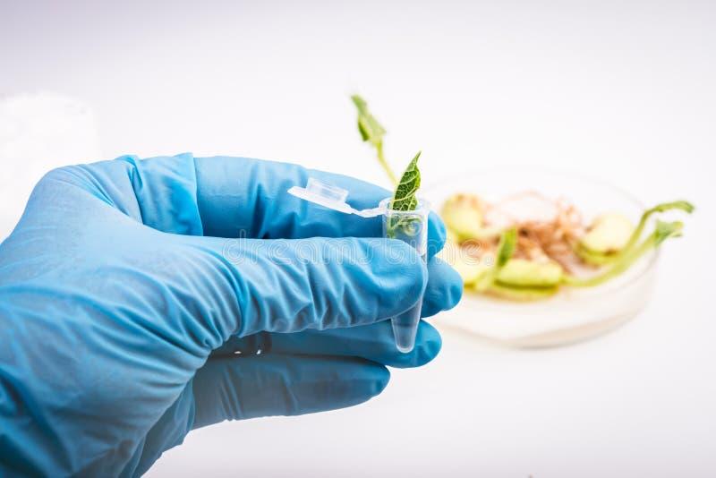 拿着植物的样品科学家 免版税库存照片