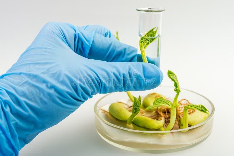 拿着植物的样品科学家 库存图片