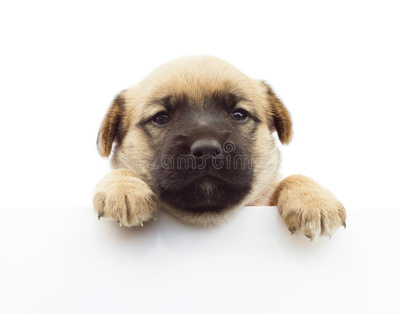 拿着横幅的狗或小狗 库存图片