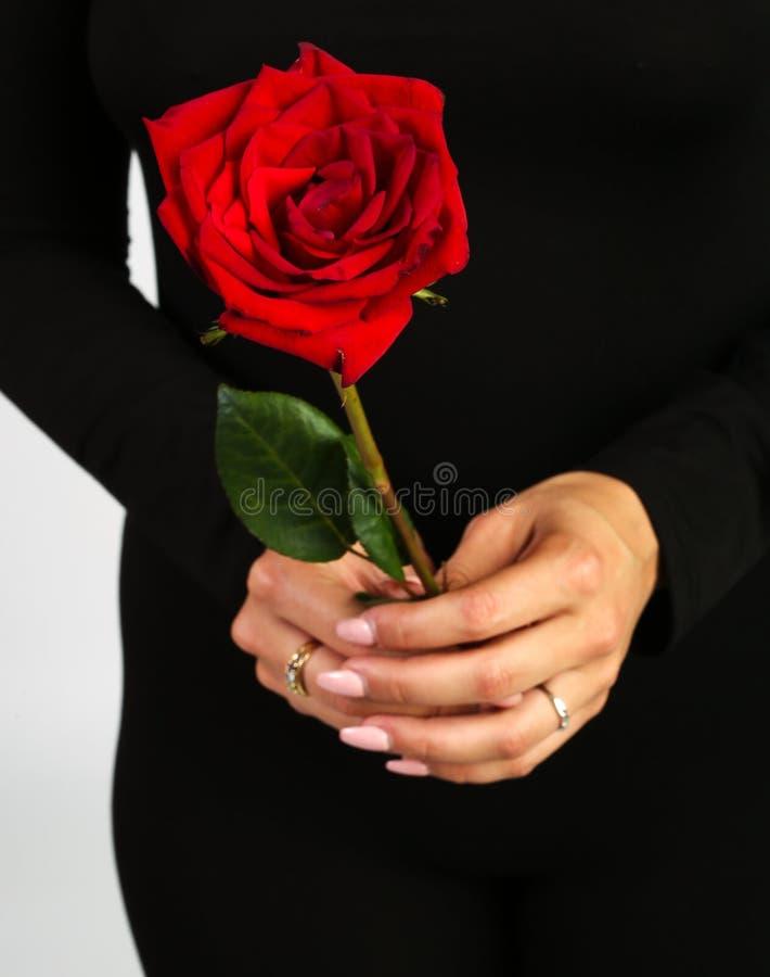 拿着玫瑰色妇女 库存图片