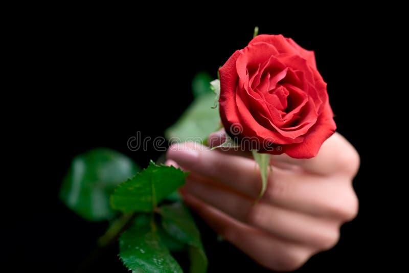 拿着玫瑰色妇女 图库摄影