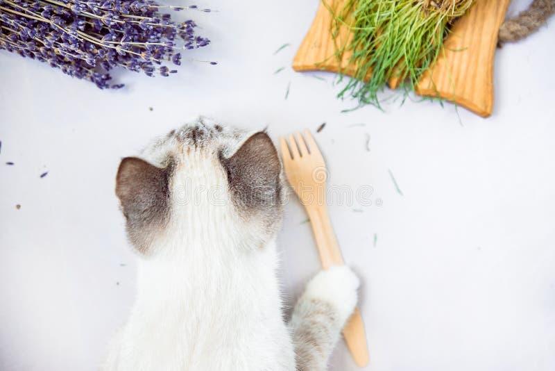 拿着生态一次性木叉子底部平的布局的白色猫 库存照片