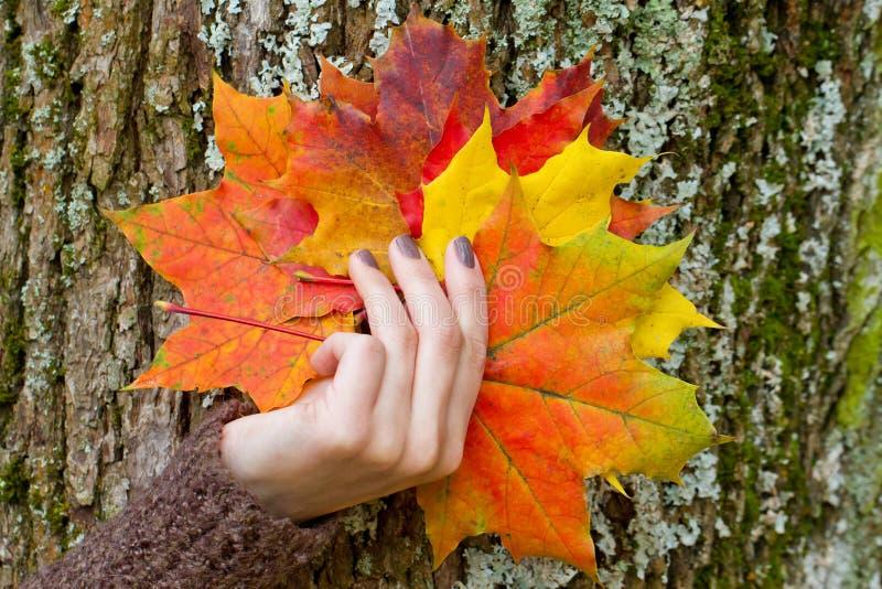 拿着秋叶的妇女 库存图片