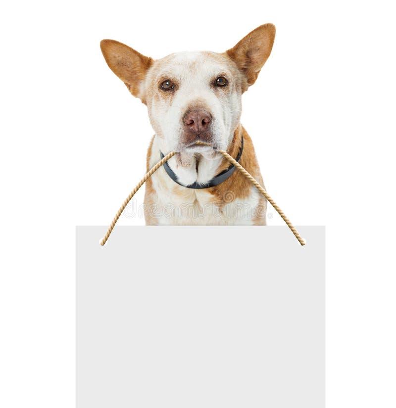拿着空白的标志的老哀伤的狗 免版税库存照片