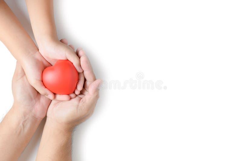 拿着红色心脏的成人和儿童手被隔绝 免版税图库摄影