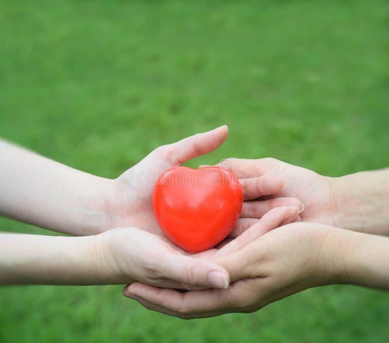 拿着红色心脏的男人和妇女的手一起保护它人、年龄、家庭、爱和医疗保健概念 库存照片