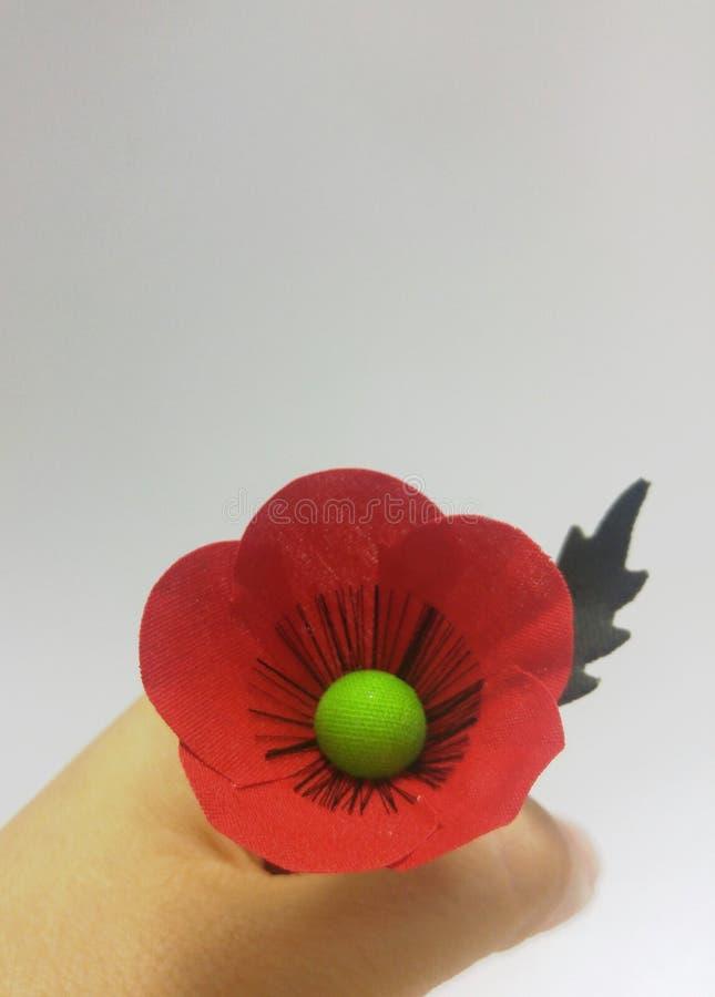 拿着红色鸦片,在白色背景的罂粟属rhoeas的妇女 免版税库存照片