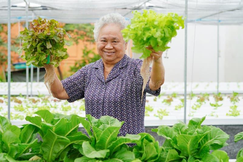 拿着绿色和赤栎菜沙拉卫生有机植物水耕的耕种树庭院农场的亚裔资深夫人 免版税库存照片