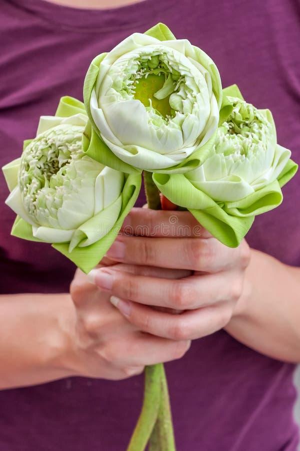 拿着美丽的开花的莲花的夫人致以对菩萨的尊敬 库存图片