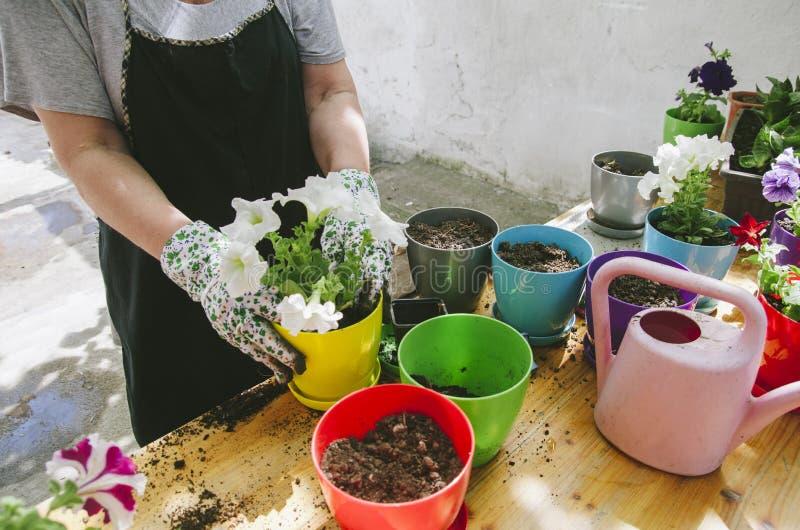 拿着花幼木的妇女在她的庭院里 图库摄影