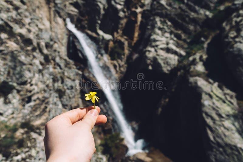 拿着花的手特写镜头反对瀑布本质上 免版税库存照片