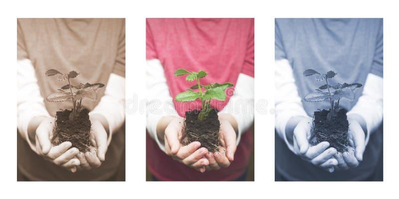 拿着草莓婴孩植物的儿童的手 库存图片