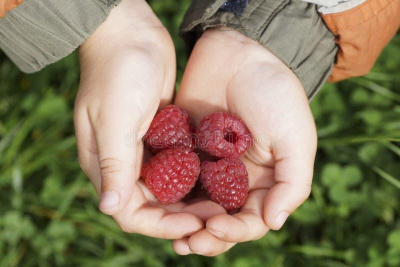 拿着莓的儿童的手 免版税图库摄影