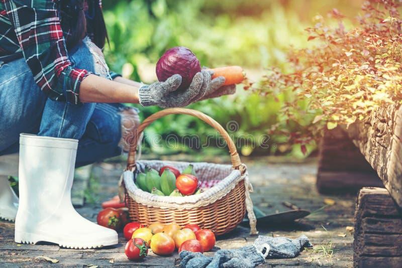 拿着菜的篮子女性农夫有机在葡萄园户外乡下 免版税图库摄影