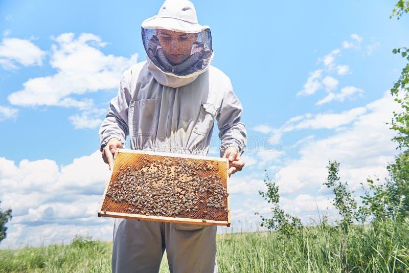 拿着蜂房框架的年轻养蜂家 免版税库存图片
