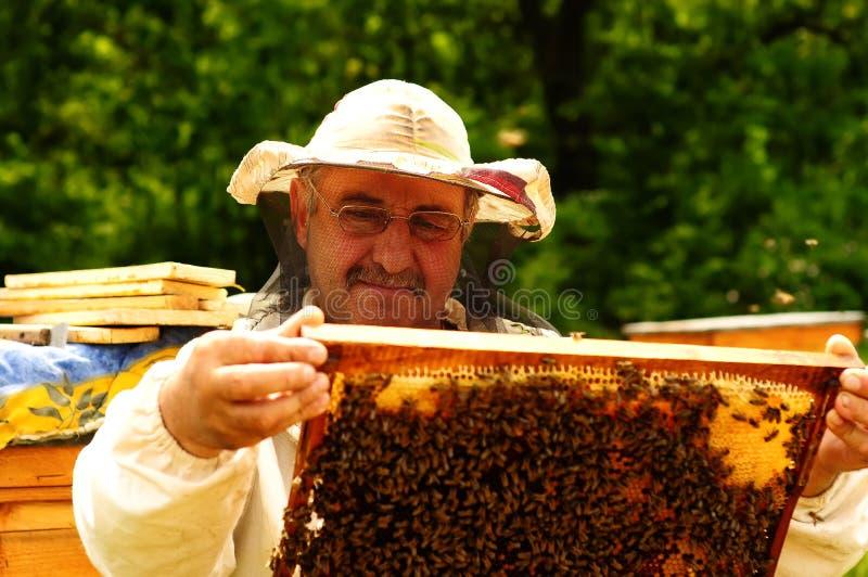 成人包括有昆虫,王后,有机,模特,蜂窝,图片,本质-73173410拍格言情趣的图片