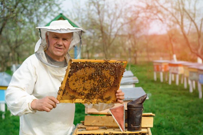拿着蜂窝的蜂农有很多蜂 检查蜂窝框架的防护工作服的蜂农在蜂房 工作 免版税库存图片