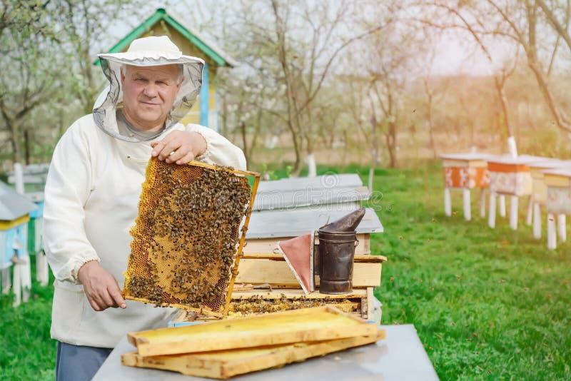 拿着蜂窝的蜂农有很多蜂 检查蜂窝框架的防护工作服的蜂农在蜂房 工作 库存照片