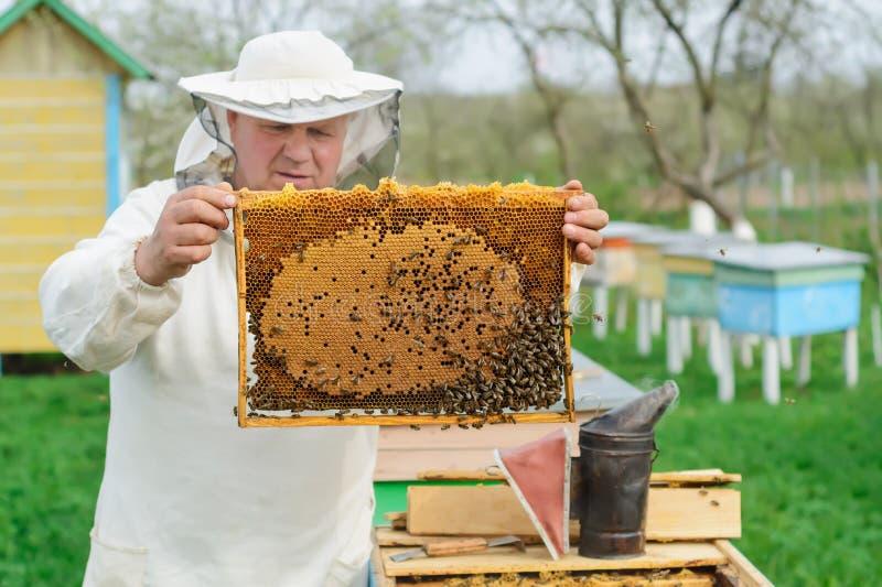 拿着蜂窝的蜂农有很多蜂 检查蜂窝框架的防护工作服的蜂农在蜂房 工作 免版税图库摄影