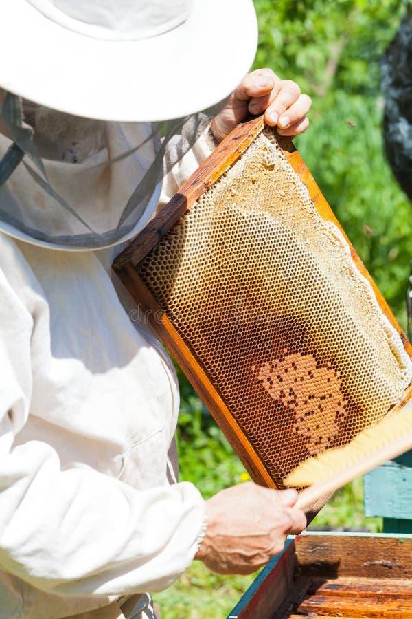 拿着蜂窝的蜂农 免版税图库摄影